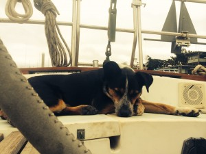 All that running around in the boatyard is exhausting, can someone else take the helm for a bit?