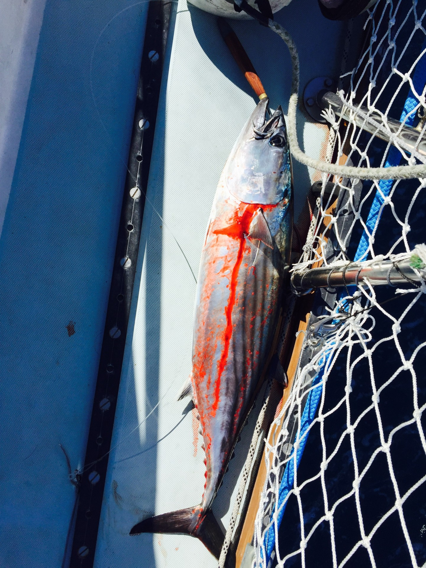There is an art to quickly killing a fish once on board (this often involves not taking a photo.) There is also the art of gratitude for beauty, life, and food.