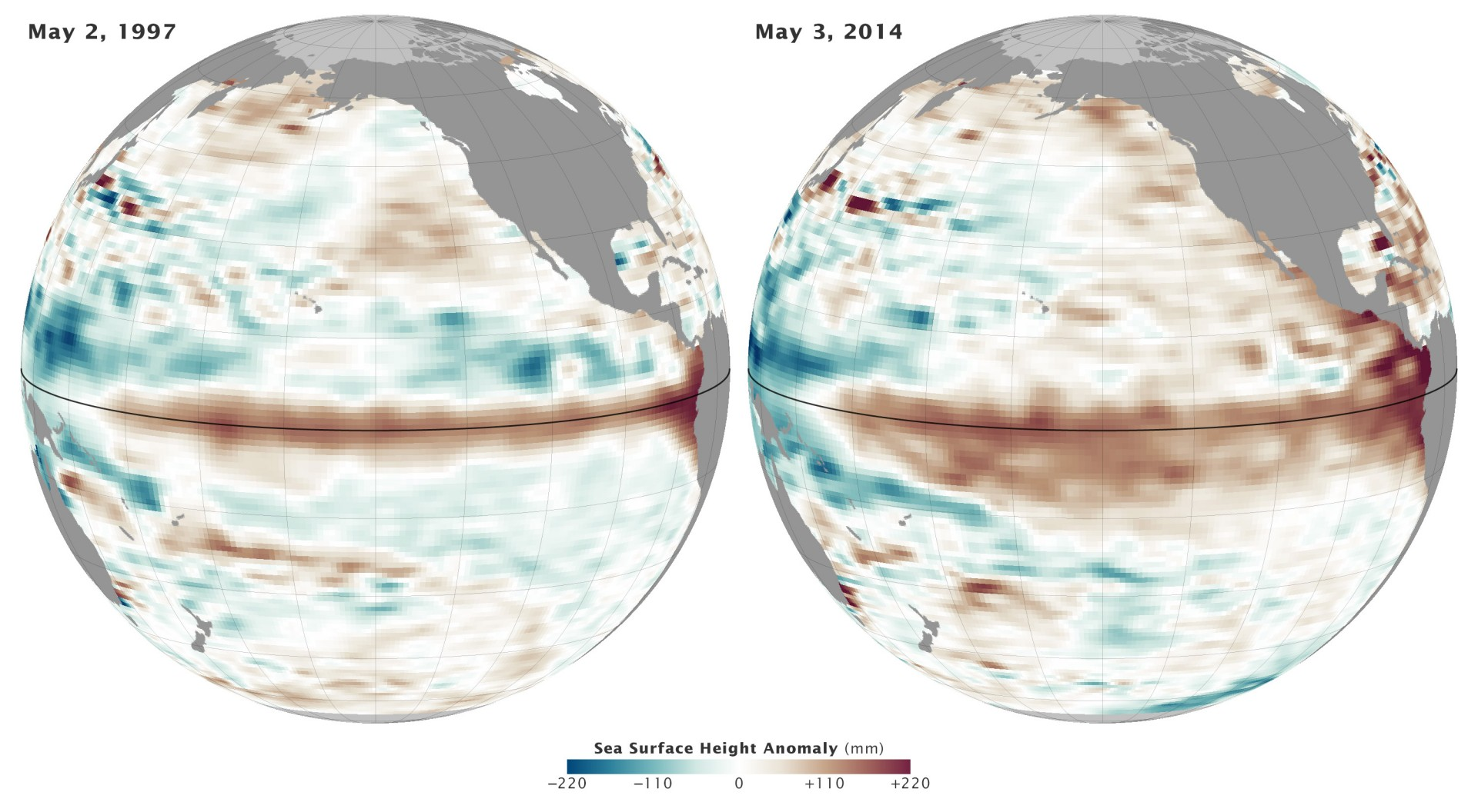 This graphic from NASA shows what El Niño looks like from a satellite that measures sea level height. Sea level height indicates increased warmth because as the water heats up, it expands and therefore rises. The molecules in warm water and farther apart than in cooler water. Note also that they compare this image from 2014 with 1997, the strong El Niño during which the black abalone disappeared.