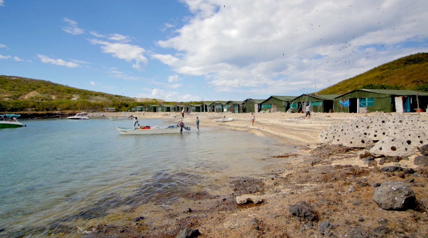 The fish camp beach, cleaned up and shared by local fishermen, national schoolchildren, and international bird watchers.