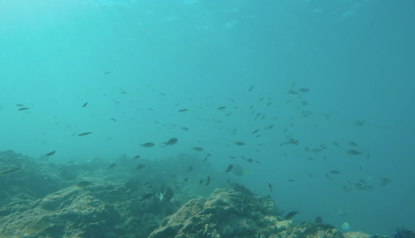 A view to the plethora of fish underwater at Isla Isabel (on a day with cloudier water.)